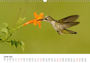 Hummingbirds Jewels of the skies (Wall Calendar 2020 DIN A3 Land