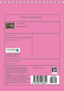 Border Collie Welpen - Familienplaner