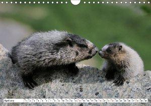 Alaskas Tierwelt - Paradies im Norden (Wandkalender 2019 DIN A4