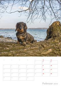 Der Dackel (M)ein treuer Weggefährte (Wandkalender 2019 DIN A2 h