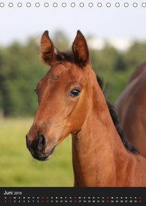 Mit Pferden durch das Jahr (Tischkalender 2019 DIN A5 hoch)