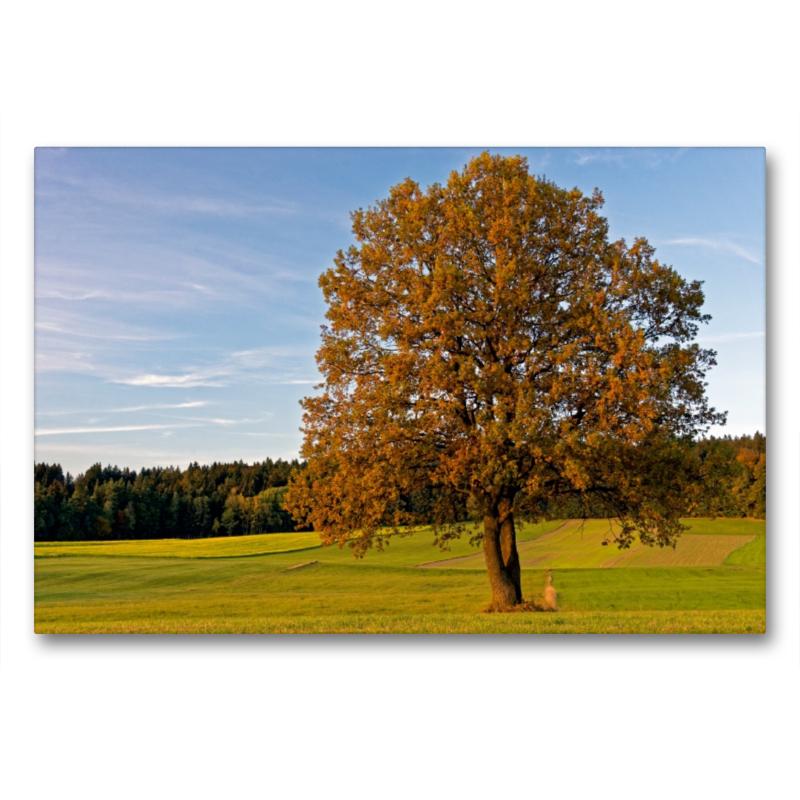Premium Textil-Leinwand 90 cm x 60 cm quer Herbstwiese nahe Neus - zum Schließen ins Bild klicken