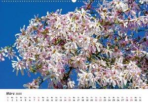 Blütezeit der Bäume und Sträucher