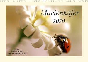 Marienkäfer / 2020