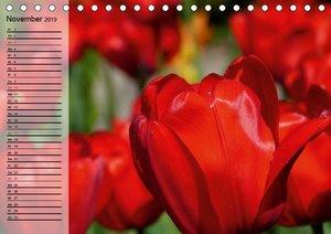 Rot. Lebenskraft, Leidenschaft und Wille (Tischkalender 2019 DIN