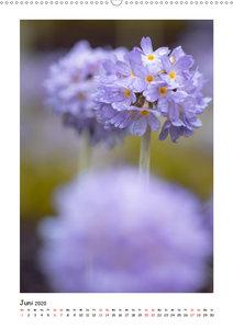 Lila Blütenzauber