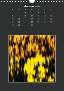 RapsARTig (Wandkalender 2019 DIN A4 hoch)
