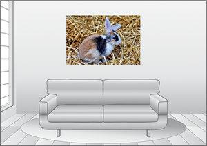 Premium Textil-Leinwand 120 cm x 80 cm quer Dreifarbiges Kaninch