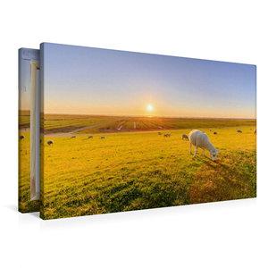 Premium Textil-Leinwand 90 cm x 60 cm quer Salzwiesen mit Schafe