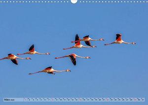 Camargue - Der wilde Süden Frankreichs (Wandkalender 2020 DIN A3