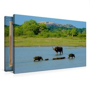 Premium Textil-Leinwand 75 cm x 50 cm quer Im Yala-Nationalpark,