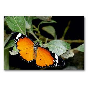 Premium Textil-Leinwand 90 cm x 60 cm quer Monarch
