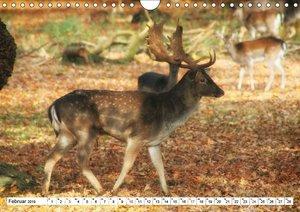Jahreszeiten im Tiergarten Hannover (Wandkalender 2019 DIN A4 qu
