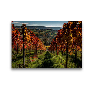 Premium Textil-Leinwand 45 cm x 30 cm quer Im Weinberg