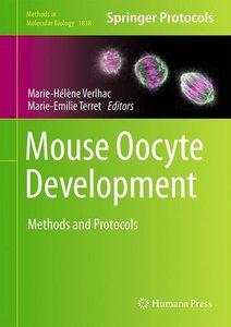 Mouse Oocyte Development