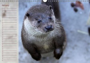 Otters / UK-Version / Birthday Calendar (Wall Calendar perpetual