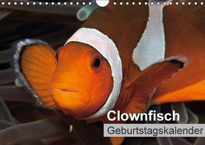 Clownfisch Geburtstagskalender (Wandkalender immerwährend DIN A4