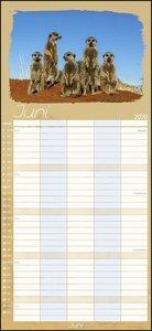 Erdmännchen Familienplaner Kalender 2020