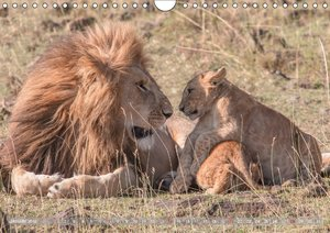Löwen - Raubkatzen Afrikas