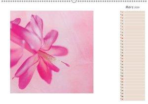 Blütenträume (Wandkalender 2019 DIN A2 quer)