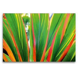 Premium Textil-Leinwand 120 cm x 80 cm quer Farbleuchten