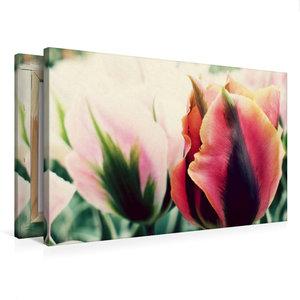 Premium Textil-Leinwand 75 cm x 50 cm quer Tulpen