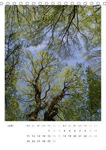 Welt der Bäume