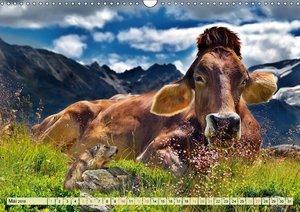 Lustig und verrückt - der ganz andere Tierkalender