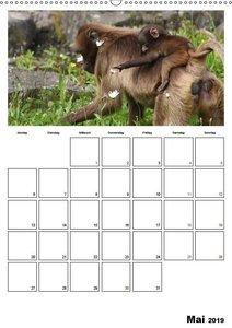 Der affige Terminplaner (Wandkalender 2019 DIN A2 hoch)