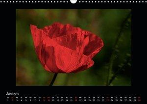 Faszination Pflanzenwelt - Unkraut, schön und wild (Wandkalender