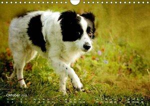 Tiere für Zuhause (Wandkalender 2019 DIN A4 quer)