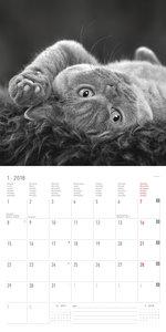 Cats 2018 Broschürenkalender
