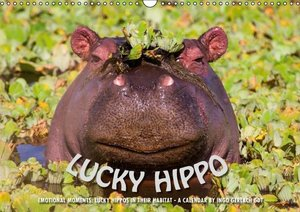 Emotional Moments: Lucky Hippo / UK-Version (Wall Calendar 2016