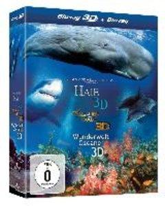 3d Box-Haie/Delfine Und Wale/Wunderwelt Ozeane