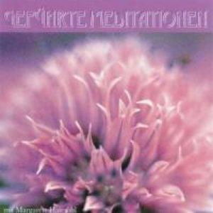 Geführte Meditationen