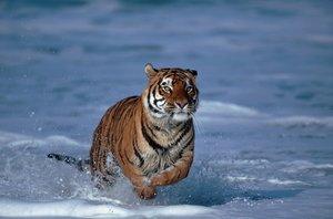 Ganges - Indiens Fluss des Lebens