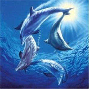 Schmidt Spiele 58508 - Spiel der Delfine, quadr., 1000 Teile Puz