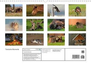 Tierische Momente (Posterbuch DIN A3 quer)