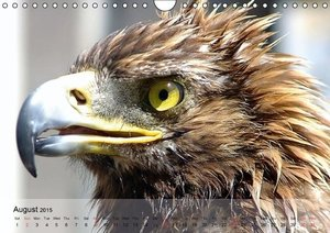 Eagle and Co. Kings of the Sky (Wall Calendar 2015 DIN A4 Landsc