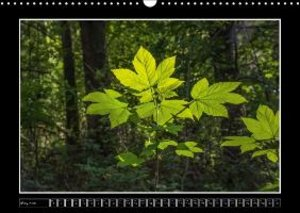 Leaves, Trees And Forest (Wall Calendar 2015 DIN A3 Landscape)