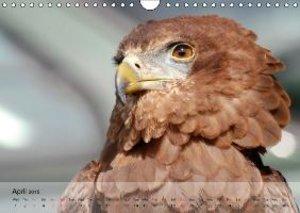 Eagle and Co. Kings of the Sky (Wall Calendar 2015 DIN A4 Landsc