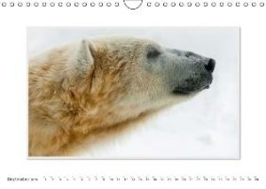Emotional Moment:The Polarbear. UK-Version (Wall Calendar 2015 D