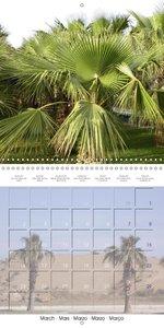 Palms: A Wonderfull Touch of Paradise (Wall Calendar 2015 300 ×