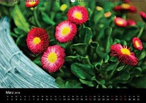 Neue Flora (Wandkalender 2016 DIN A2 quer)