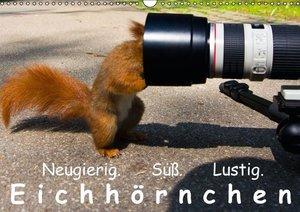 Reichert, R: Eichhörnchen (Wandkalender 2015 DIN A3 quer)