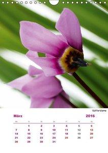 Pink (Wandkalender 2016 DIN A4 hoch)
