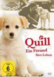 Quill - Ein Freund fürs Leben