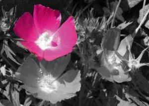 Couleurs du printemps (Livre poster DIN A4 horizontal)