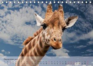 Afrikas schöne Tierwelt