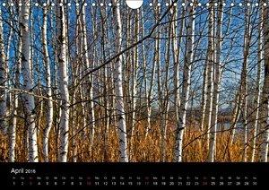 Bäume sind Träume (Wandkalender 2016 DIN A4 quer)